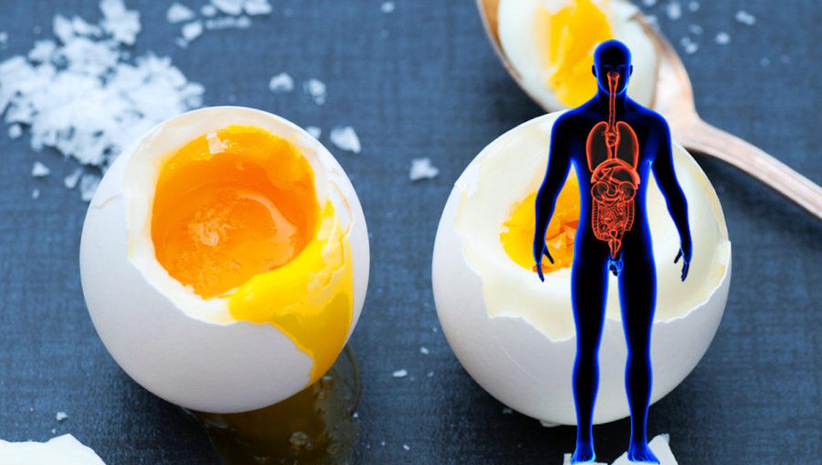 hoeveel gram eiwit per ei